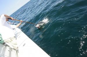 Fish in Deep Sea