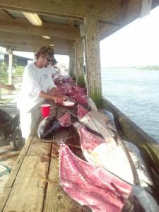 Tuna Fish Meat