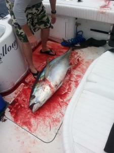 Tuna Fishing Louisiana
