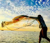 catch fish using net
