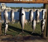 venice beach fishing charters