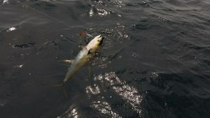 Fishing Louisiana, LA