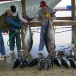 Washing Tuna Fishing