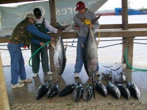Washing Tuna Fishing