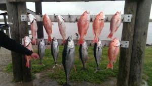 Fishing Charters Venice