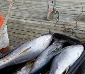 Amberjack fishing