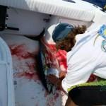 Caught Tuna Fish