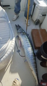 swordfish caught