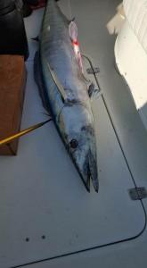marlin fish fishing