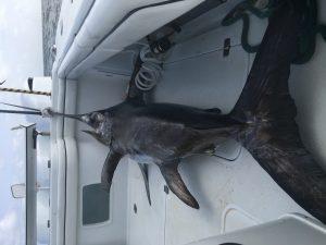 Venice Tuna Charters